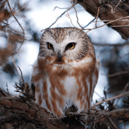Discovering the Birds of the Boundary Waters
