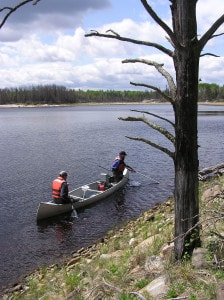 Fish sampling during mercury study on Shoepack Lake in Voyageurs National Park