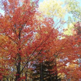 Photo Round-Up: Fall Beauty In The Quetico-Superior Region