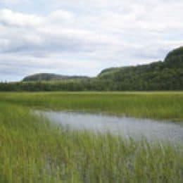 Protecting Our Wild Rice Heritage