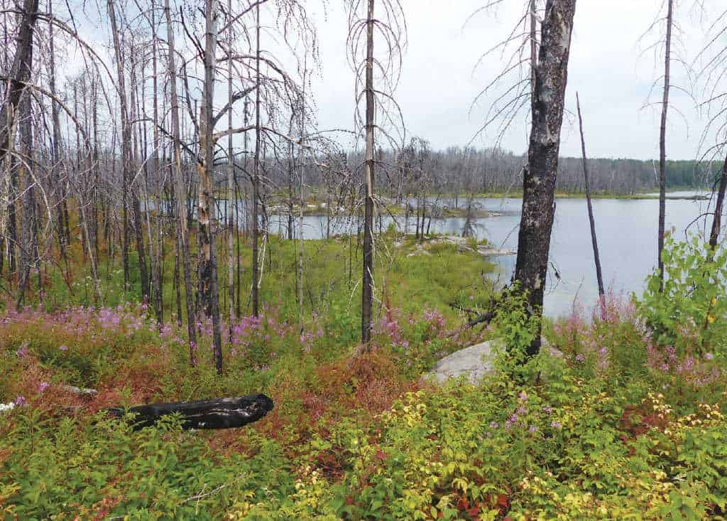 Pagami Creek Fire Forest Renewal, Lake Four.