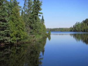 Pine forests on Sawbill Lake