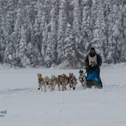 Fast Trail Reported as Minnesota Mushers Win Gunflint Dogsled Races