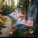 Superior National Forest Lighting Fires For Blueberries And Other Benefits