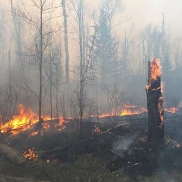 'Large' Wildfire Burning On Superior National Forest