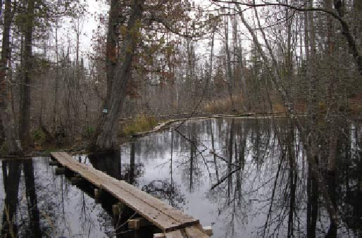 A boardwalk traverses a beaver pond on the Superior Hiking Trail. Photo by Greg Seitz.