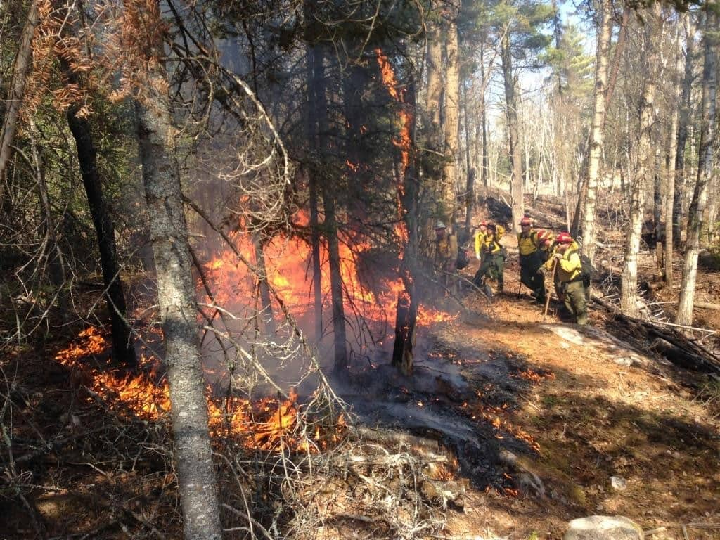 Igniting a prescribed fire on the Tofte Ranger District in the spring of 2016 (Superior National Forest photo)