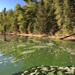 Harmful Algae Prompt Water Warnings in Voyageurs National Park