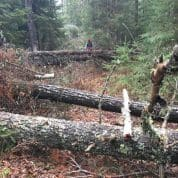 Northern Minnesota Man Will Spend a Month Clearing Trails in the Boundary Waters