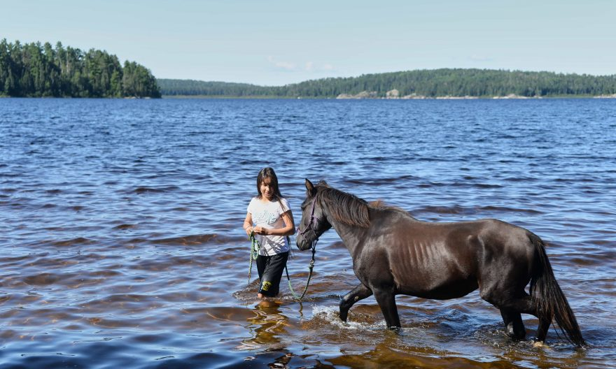 Quetico Park celebrates ponies that once called the wilderness home