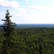 Researchers restore forests in northeastern Minnesota's changing landscape