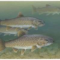 Boundary Waters lake trout season opens this weekend