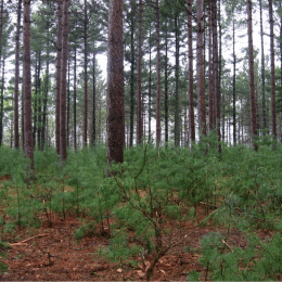 Public input invited on increasing timber harvest on Minnesota state lands