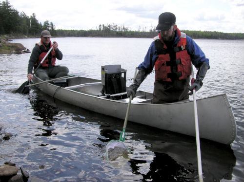 Fish sampling during the mercury study on Shoepack Lake in Voyageurs National Park.